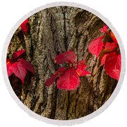 Fall Leaves Against Tree Trunk Round Beach Towel