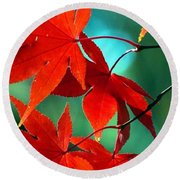 Fall Leaves In All Their Glory Round Beach Towel