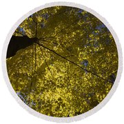 Fall Maple Round Beach Towel
