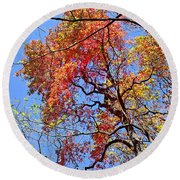 Fall Trees 2 Of Wnc Round Beach Towel