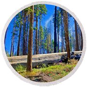 Fallen Sequoia In Mariposa Grove In Yosemite National Park-california Round Beach Towel