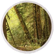 Falling Trees In The Rainforest Round Beach Towel