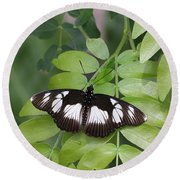 False Diadem Butterfly Round Beach Towel