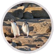 Family Of Nz Yellow-eyed Penguin Or Hoiho On Shore Round Beach Towel