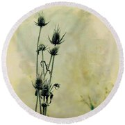 Family Of Teasels Round Beach Towel