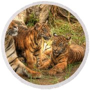 Tiger Family Round Beach Towel