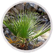 Fan Palm Leaf Over Andreas Creek In Indian Canyons-ca Round Beach Towel