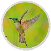 Fawn-breasted Brilliant Hummingbird Round Beach Towel