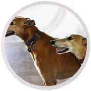 Fawn Greyhound Dogs Profile Round Beach Towel