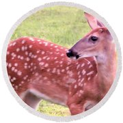 Fawn In The Waning Summer Round Beach Towel