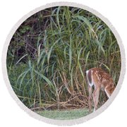 Fawn Snacking Round Beach Towel