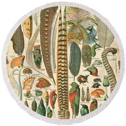 Feather Plumes-a Round Beach Towel