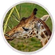 Feeding Giraffe Round Beach Towel