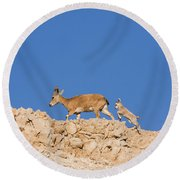 female and young Nubian Ibex Round Beach Towel