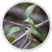 Female Anna's Hummingbird Round Beach Towel