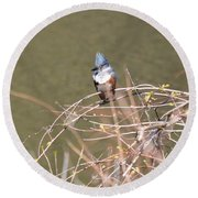 Female Belted Kingfisher Round Beach Towel