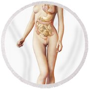 Female Body With Full Endocrine System Round Beach Towel