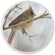 Female Cardinal In Snow 02 Round Beach Towel