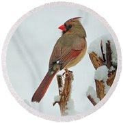 Female Cardinal In The Snow Round Beach Towel by Sandy Keeton