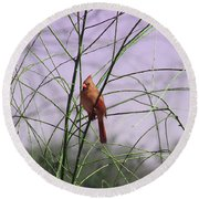 Female Cardinal In Willow Round Beach Towel