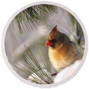 Female Cardinal Nestled In Snow Round Beach Towel
