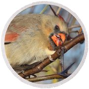 Thorns And Berries - Cardinal Round Beach Towel