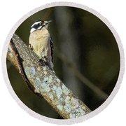 Female Downy Woodpecker Round Beach Towel