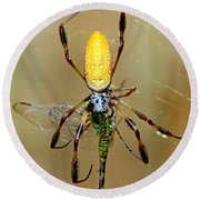 Female Golden Silk Spider Eating Round Beach Towel