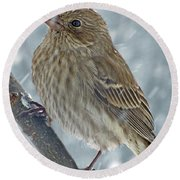 Female House Finch In Snow 1 Round Beach Towel