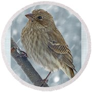 Female House Finch In Snow Round Beach Towel