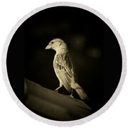 Female House Finch Round Beach Towel
