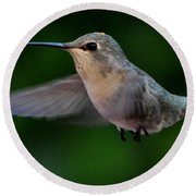 Female Hummingbird Anna's In Flight Round Beach Towel