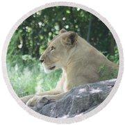 Female Lion On Guard Round Beach Towel