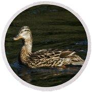 Female Mallard And Duckling Round Beach Towel