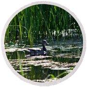 Female Mallard Duck Swimming Round Beach Towel