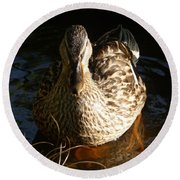 Female Mallard In Pond Round Beach Towel