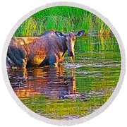 Female Moose Near Airport In Chicken-alaska   Round Beach Towel