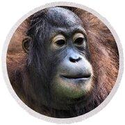 Female Orangutan Borneo Round Beach Towel