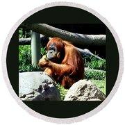 Female Orangutan-san Diego Round Beach Towel