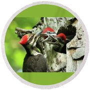 Female Pileated Woodpecker At Nest Round Beach Towel