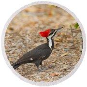 Female Pileated Woodpecker Round Beach Towel