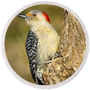 Female Red-bellied Woodpecker Round Beach Towel
