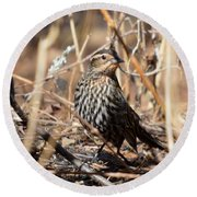 Female Red-winged Blackbird Round Beach Towel