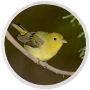 Female Scarlet Tanager Round Beach Towel