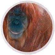 Female Sumatran Orangutan Round Beach Towel