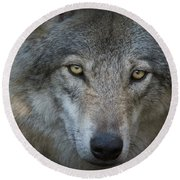 Fenris... Round Beach Towel