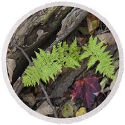 Fern And Maple Leaves Maine Img 6182 Round Beach Towel