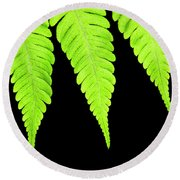 Fern Isolated On Black Background Round Beach Towel