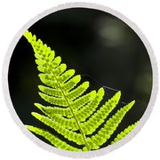 Fern Tip Round Beach Towel