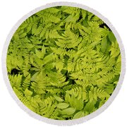 1m2436-ferns At The Base Of Mt. Robson  Round Beach Towel